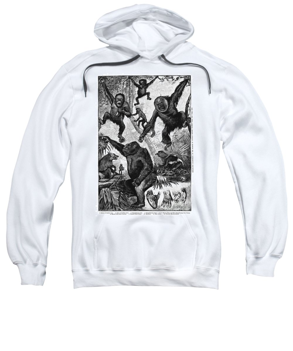 1883 Sweatshirt featuring the photograph Zoology: Primates, 1883 by Granger