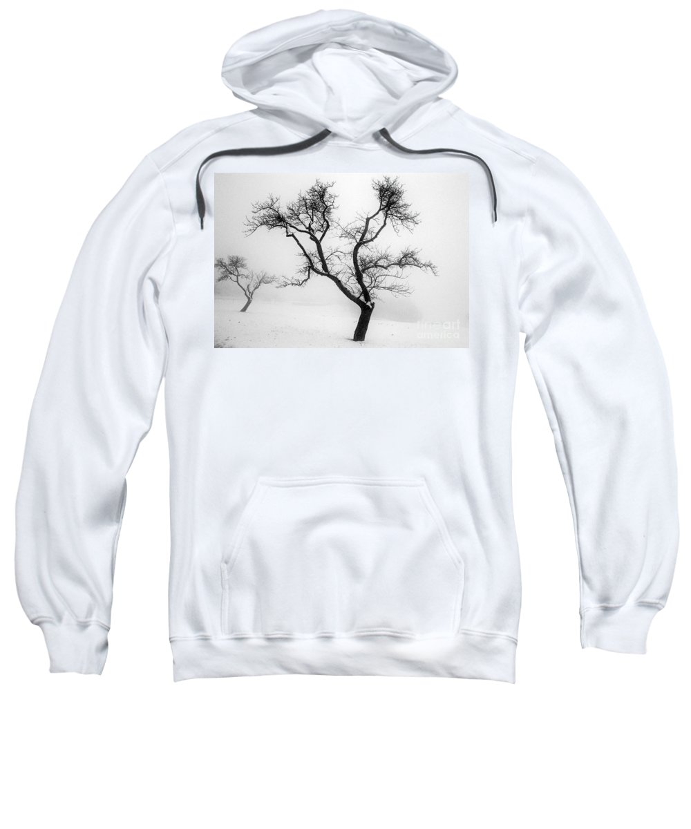 Empty Sweatshirt featuring the photograph Tree In The Snow by Ilan Amihai