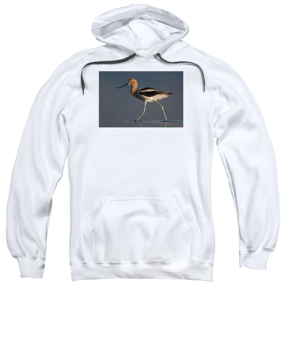 American Avocet Sweatshirt featuring the photograph American Avocet by Don Baccus