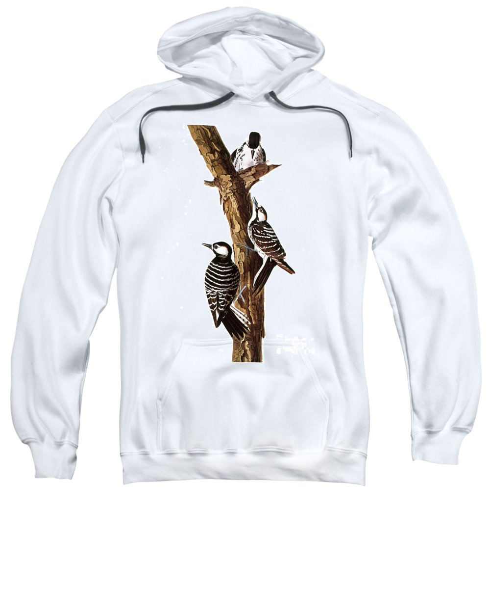 19th Century Sweatshirt featuring the photograph Audubon: Woodpecker by Granger