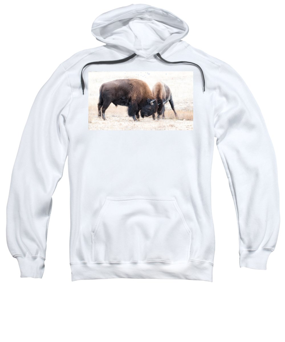Bison Sweatshirt featuring the photograph Battle Of The Bison In Rut by Yeates Photography