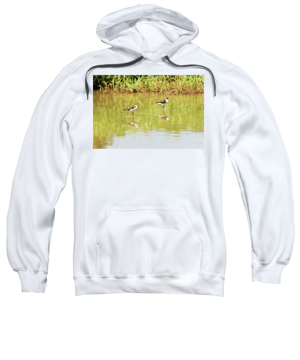Animal Sweatshirt featuring the photograph Black Necked Stilt, In The Pond In The Galapagos by Marek Poplawski