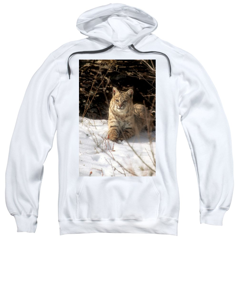 Wildlife Sweatshirt featuring the photograph Bobcat In The Snow. by Larry Allan