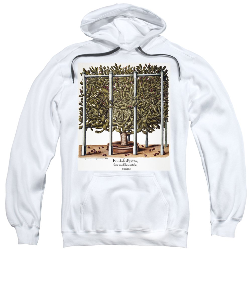 1613 Sweatshirt featuring the photograph Cactus: Opuntia, 1613 by Granger