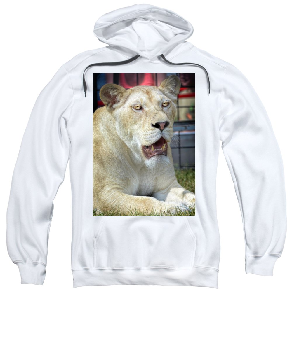 Lion Sweatshirt featuring the photograph Circus Lion by LeeAnn McLaneGoetz McLaneGoetzStudioLLCcom