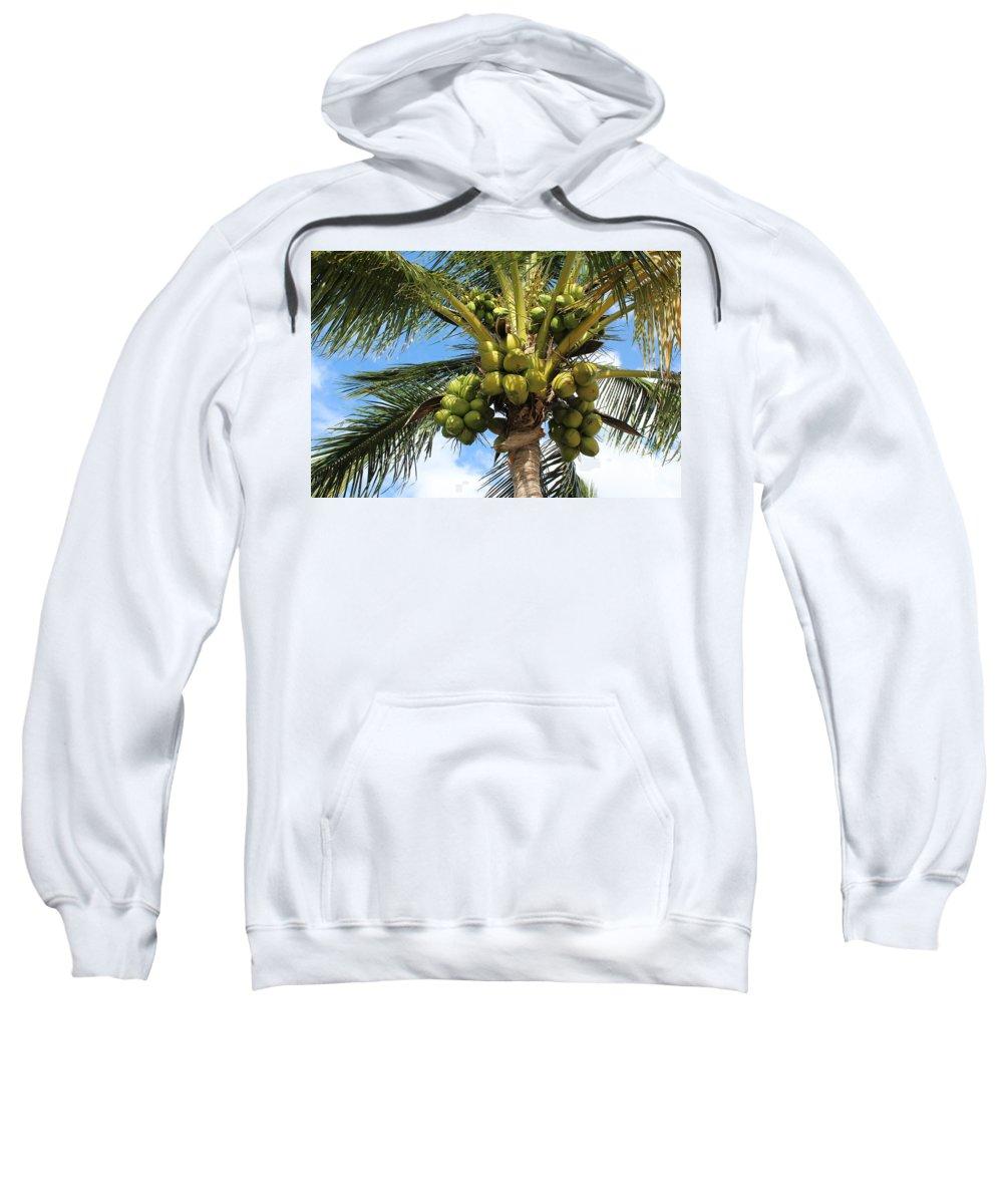 Florida Trees Sweatshirt featuring the photograph Coconut Tree by David Zuhusky