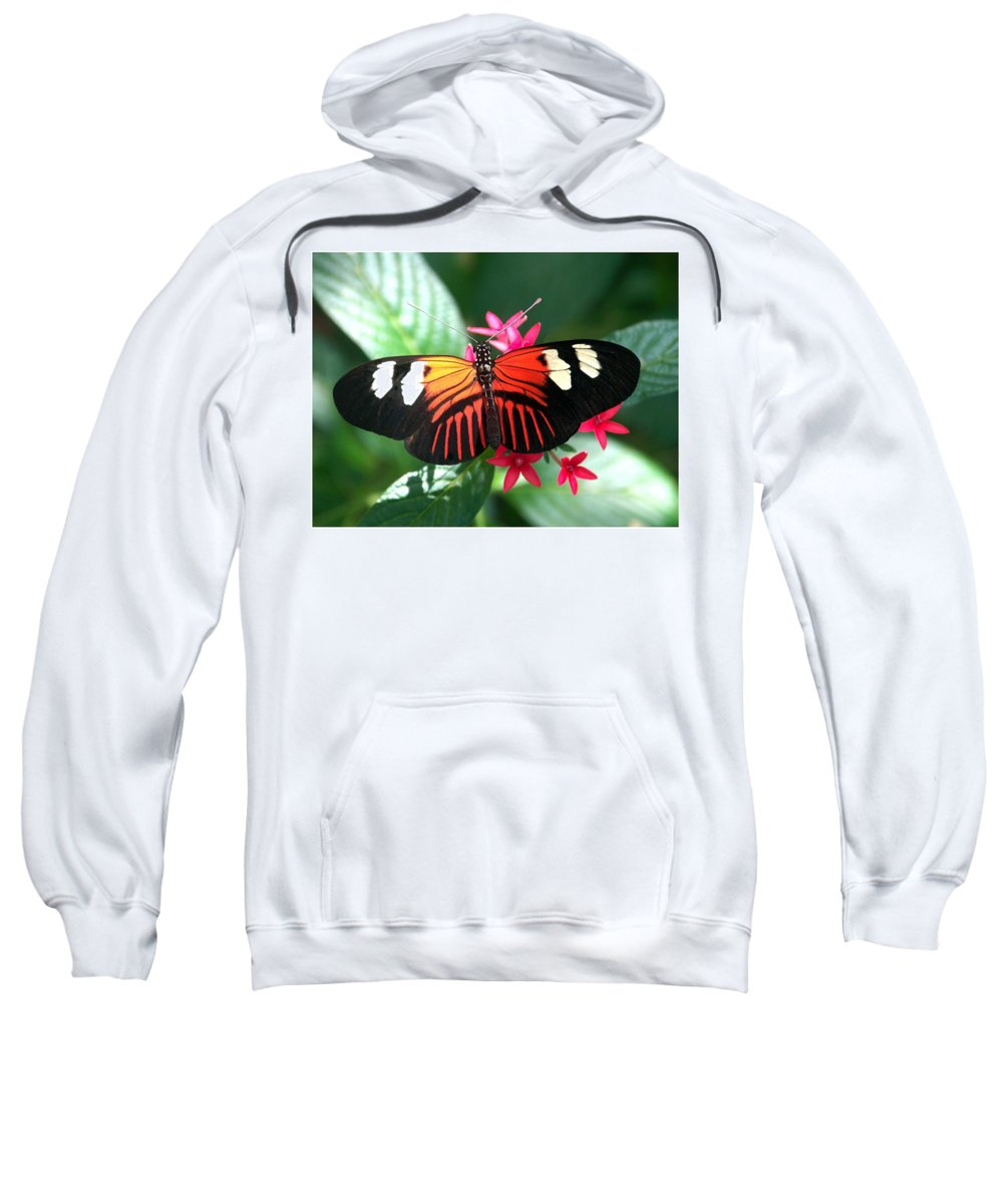 Butterfly Sweatshirt featuring the photograph Erato Longwing by William Evans