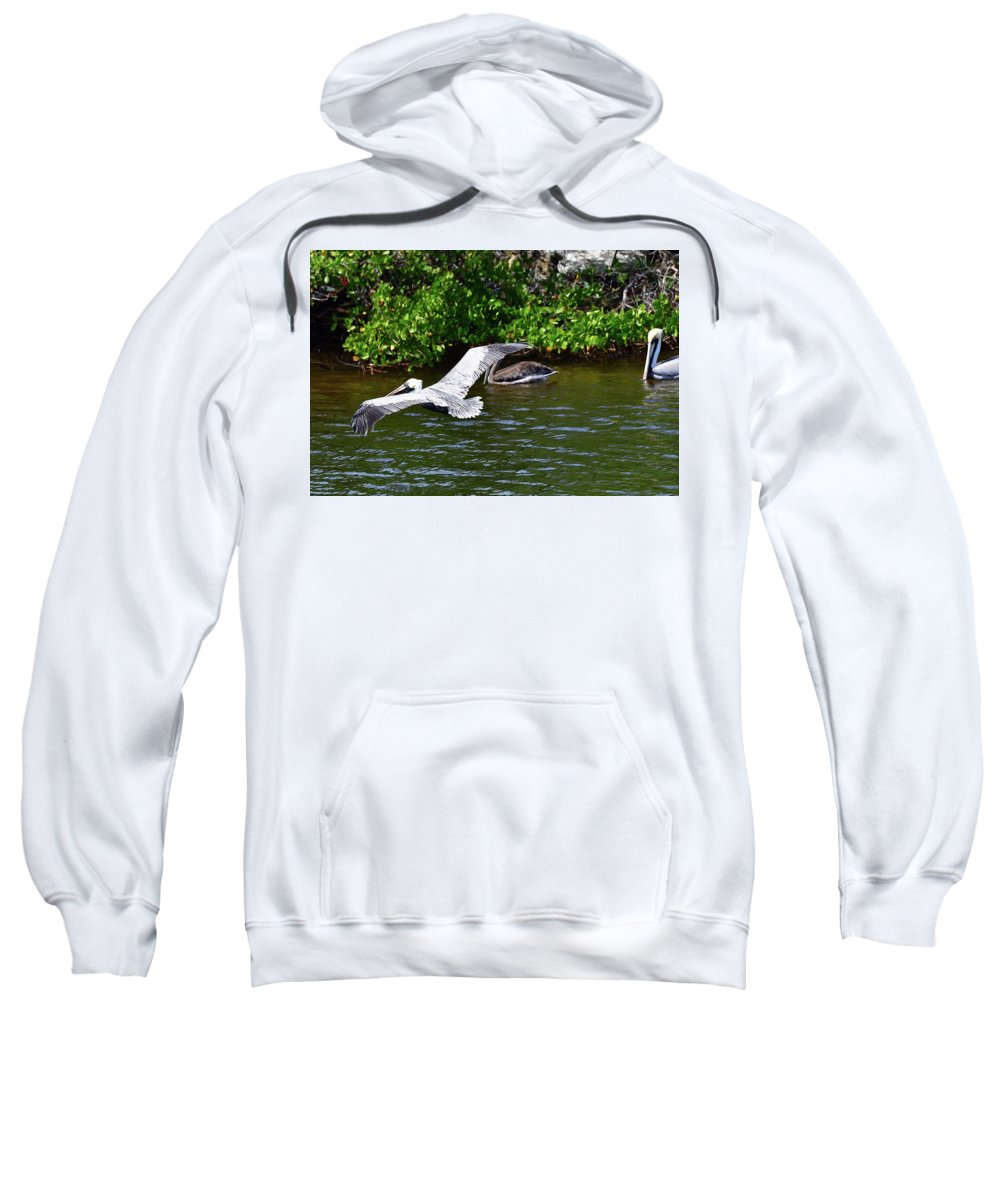 Pelican Sweatshirt featuring the photograph Gliding Pelican by Mark Madion