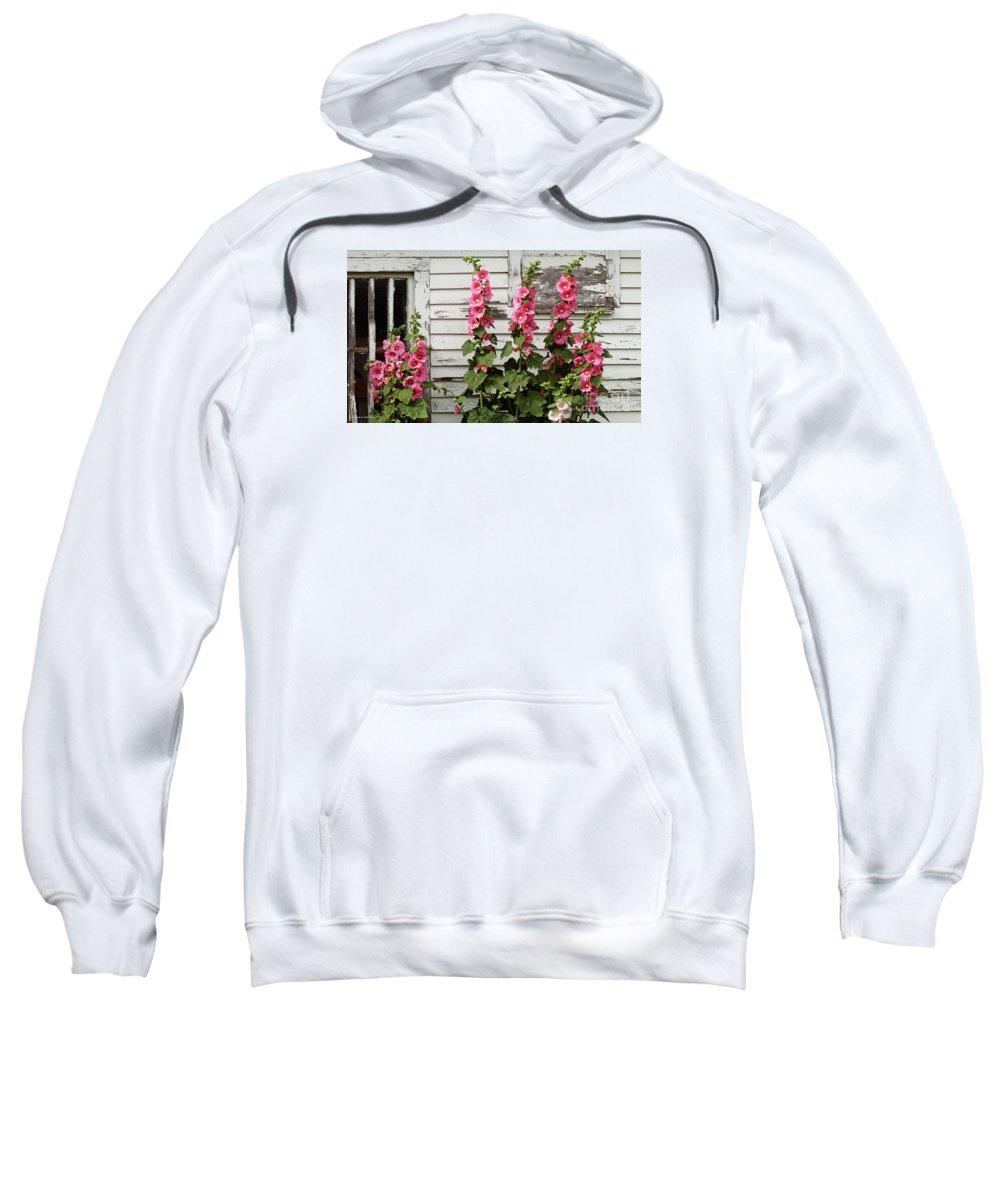 Hollyhocks Sweatshirt featuring the pyrography Hollyhocks by Bruce Morrison