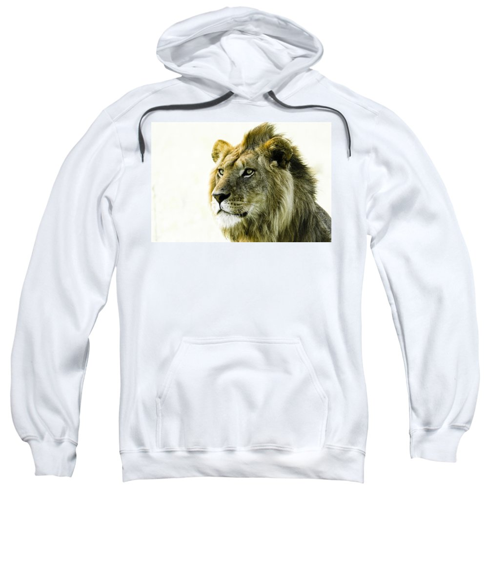 Lion Sweatshirt featuring the photograph Intensity by Michele Burgess