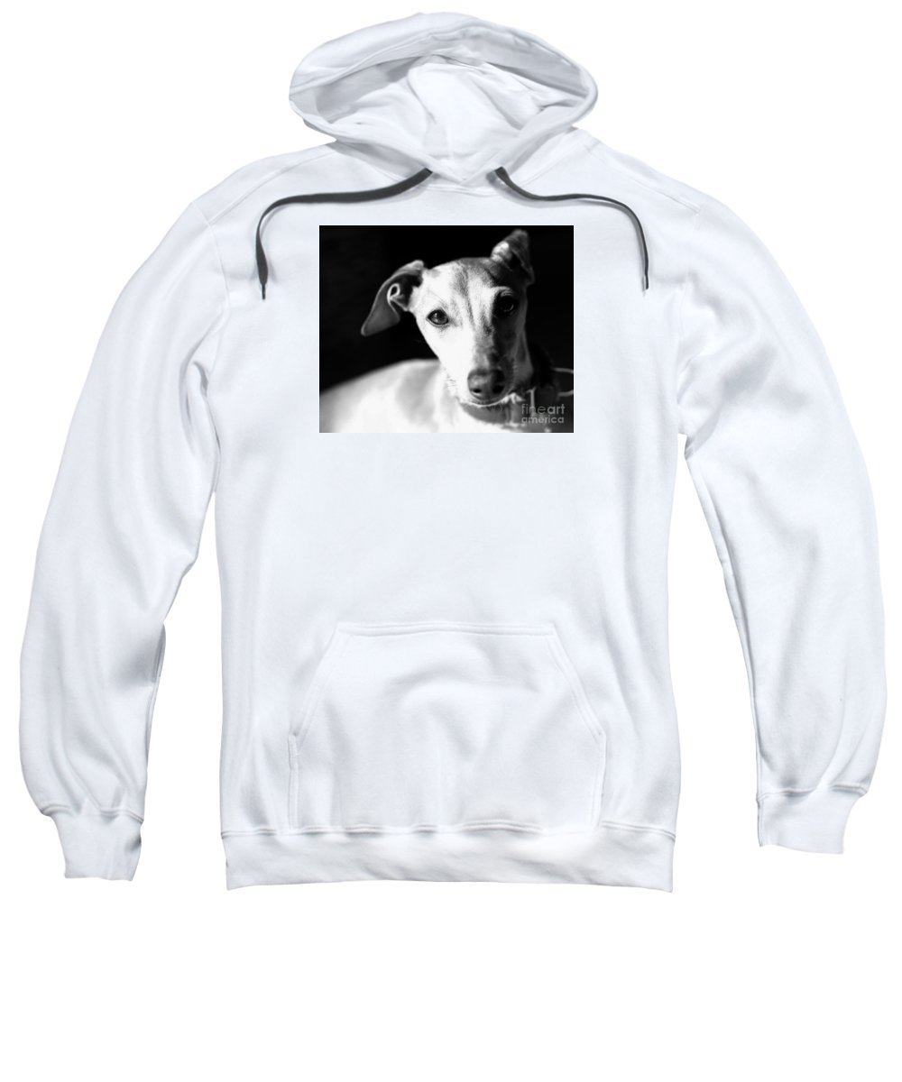 Editorial Sweatshirt featuring the photograph Italian Greyhound Portrait In Black And White by Angela Rath