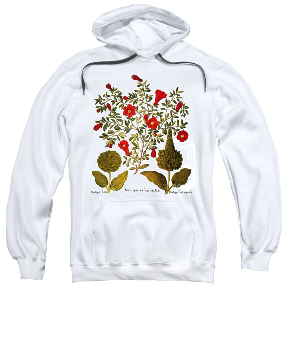 1613 Sweatshirt featuring the photograph Pomegranate, 1613 by Granger