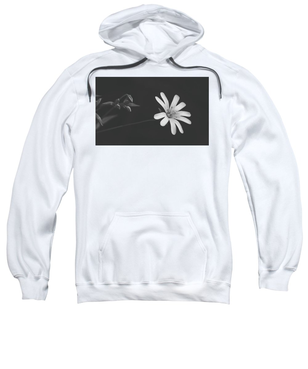 Flower Sweatshirt featuring the photograph Solitary Beauty by Pixabay