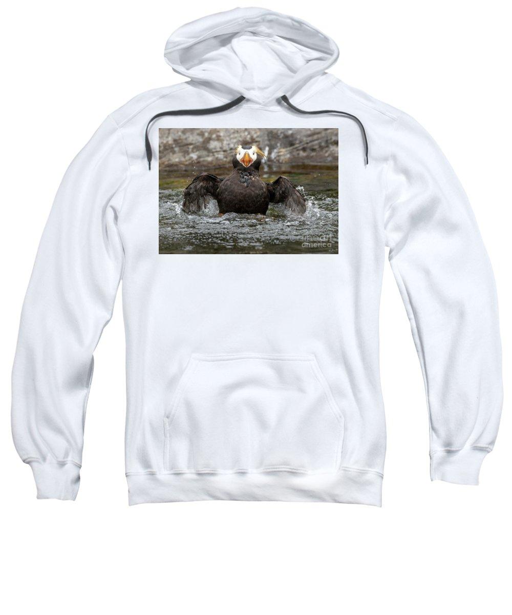 Auklets Hooded Sweatshirts T-Shirts