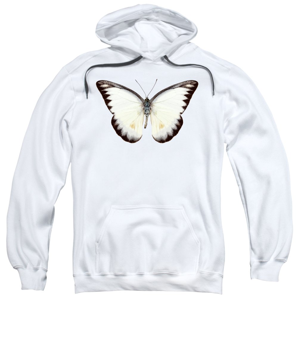 Albatross Hooded Sweatshirts T-Shirts