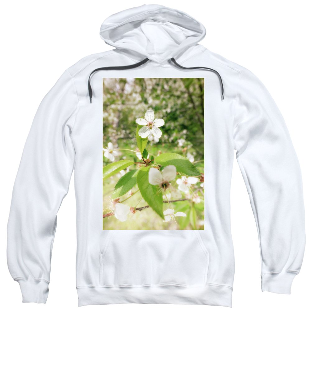 Background Sweatshirt featuring the photograph White Cherry Flower by Alain De Maximy