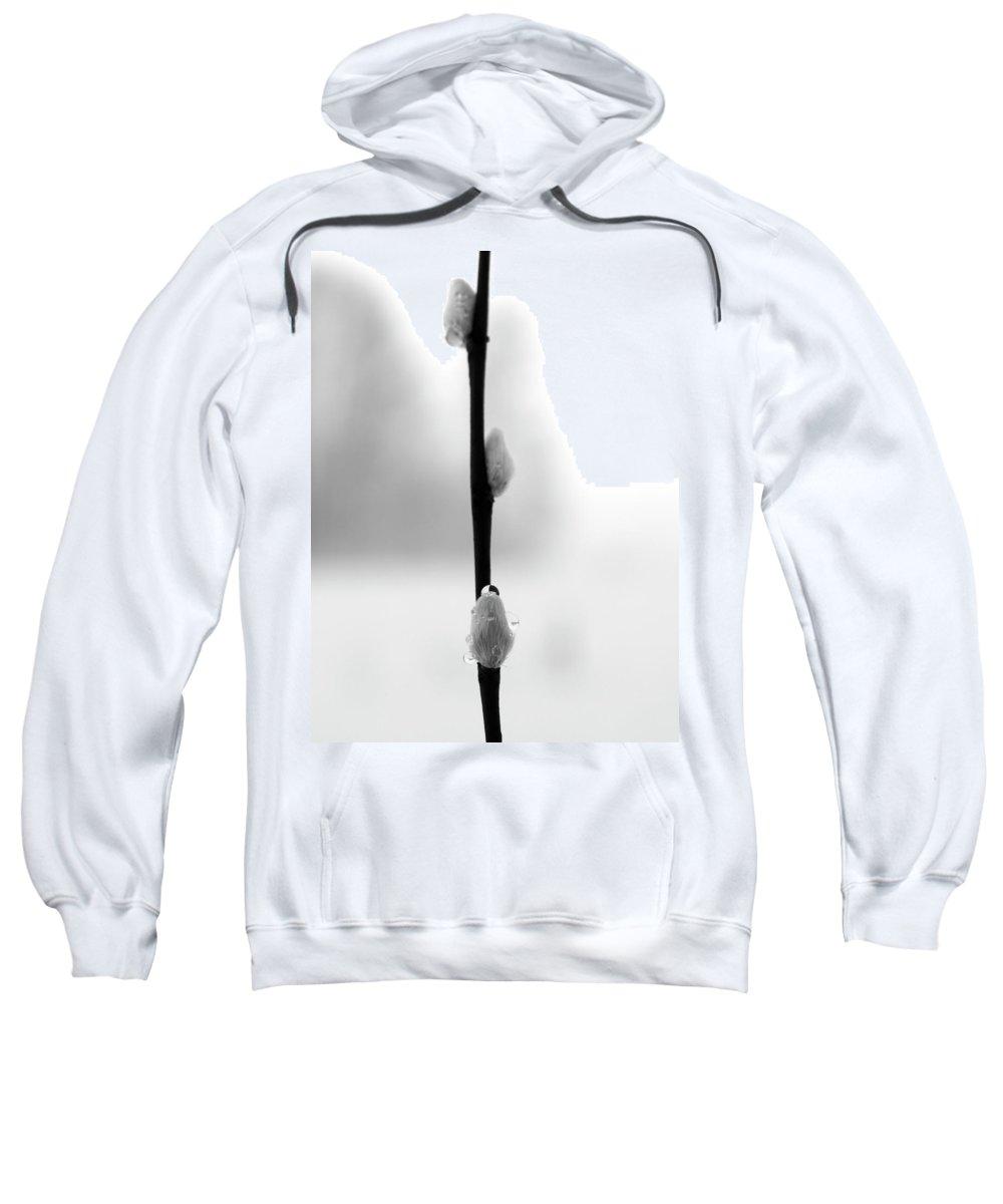 Lehtokukka Sweatshirt featuring the photograph Willow Catkins 2 by Jouko Lehto
