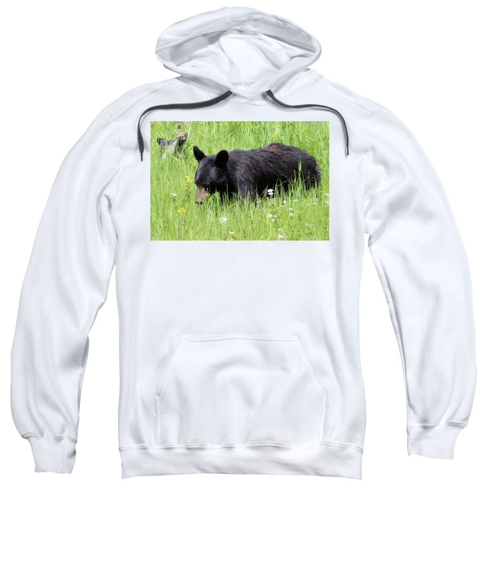 American Black Bear Sweatshirt featuring the photograph American Black Bear Yellowstone Usa by Bob Savage