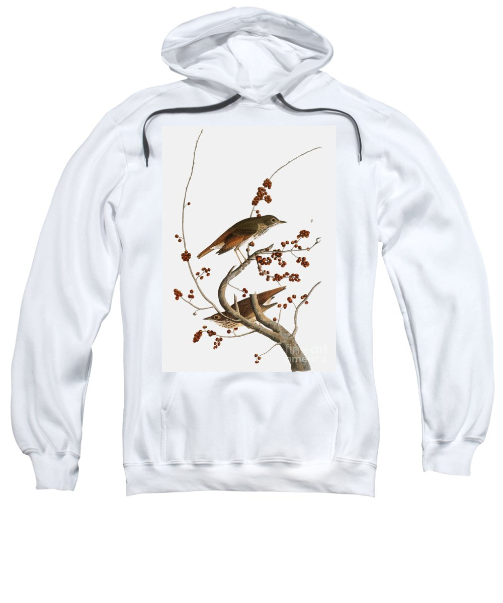 1838 Sweatshirt featuring the photograph Audubon: Thrush by Granger
