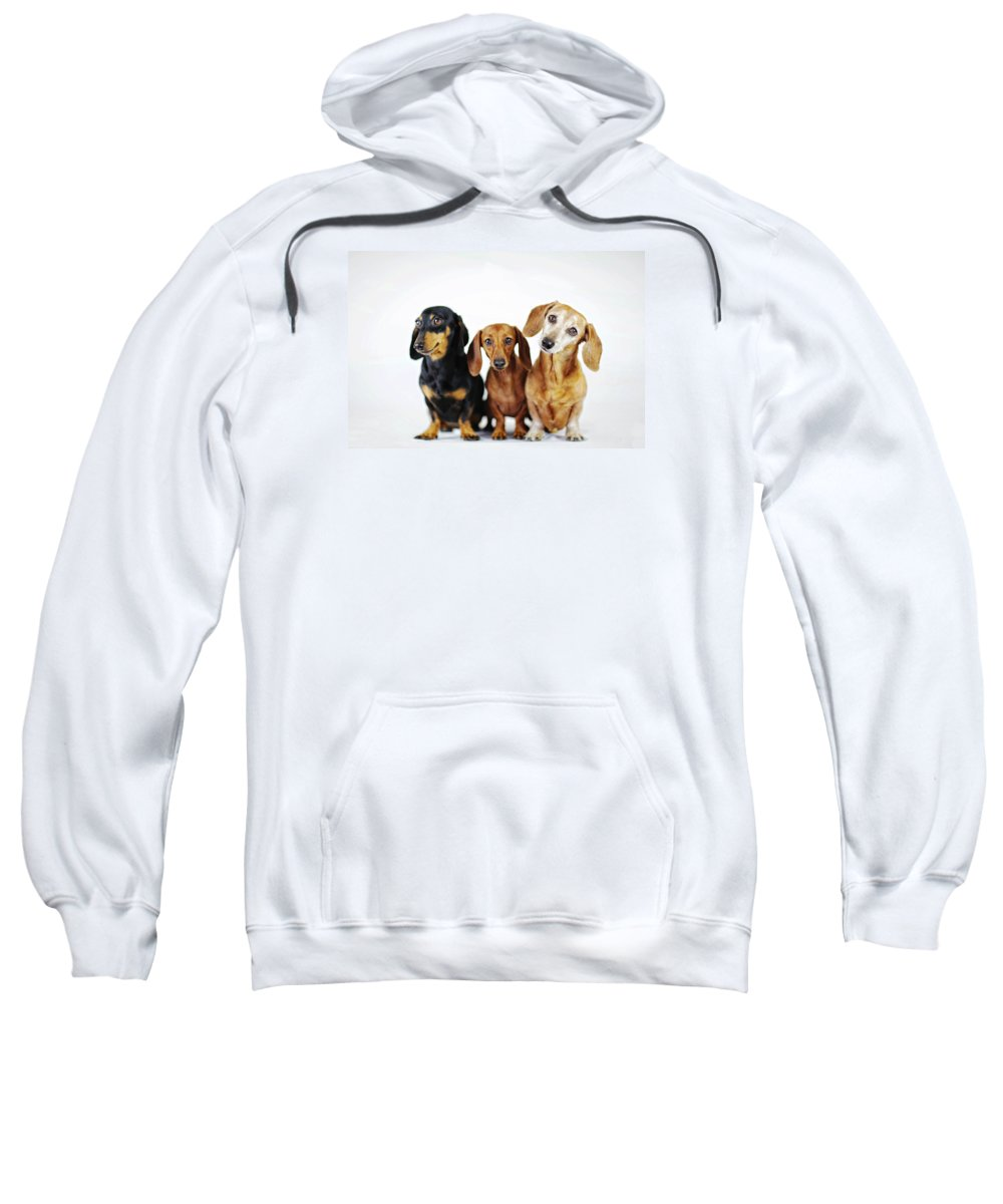 Dachshund Sweatshirt featuring the photograph Dachshund Pack by Johnny Ortez-Tibbels
