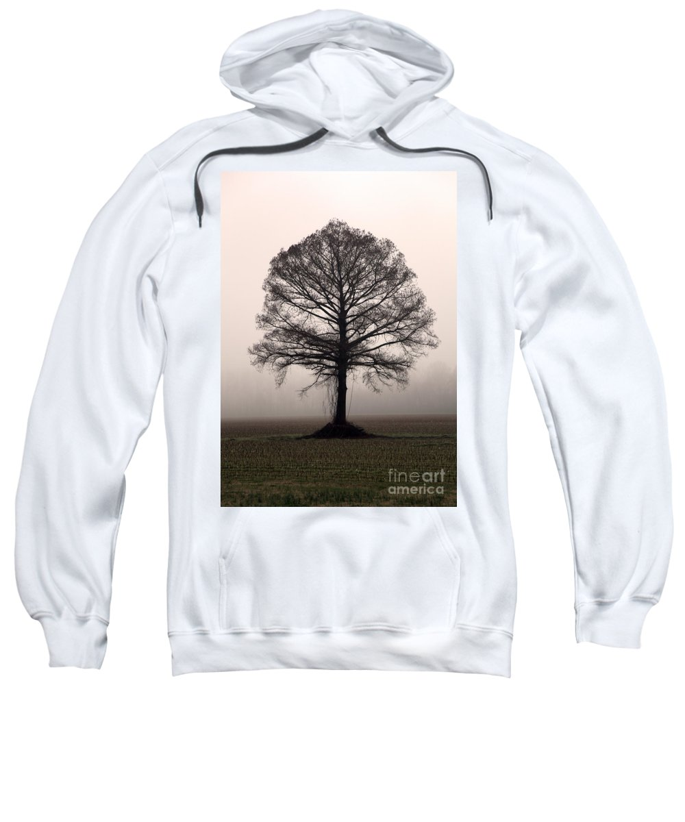 Trees Sweatshirt featuring the photograph The Tree by Amanda Barcon