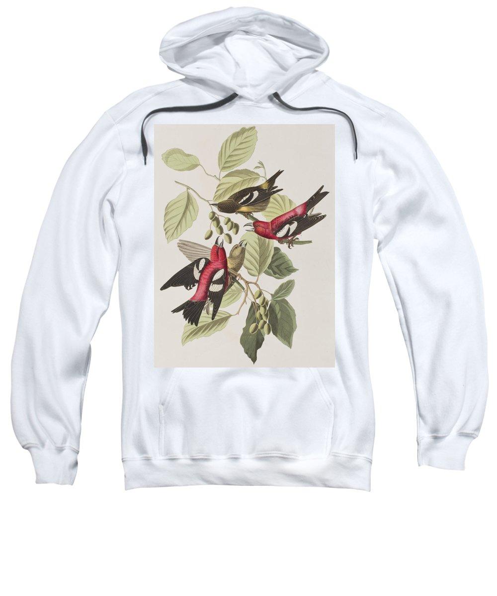 Crossbill Hooded Sweatshirts T-Shirts