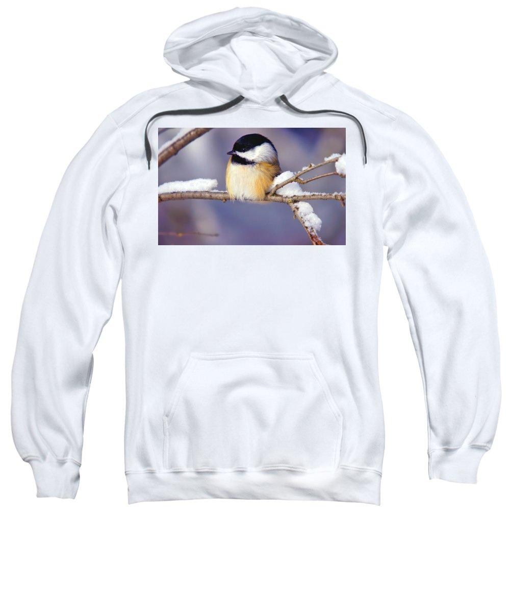 Bird Sweatshirt featuring the digital art Bird by Bert Mailer