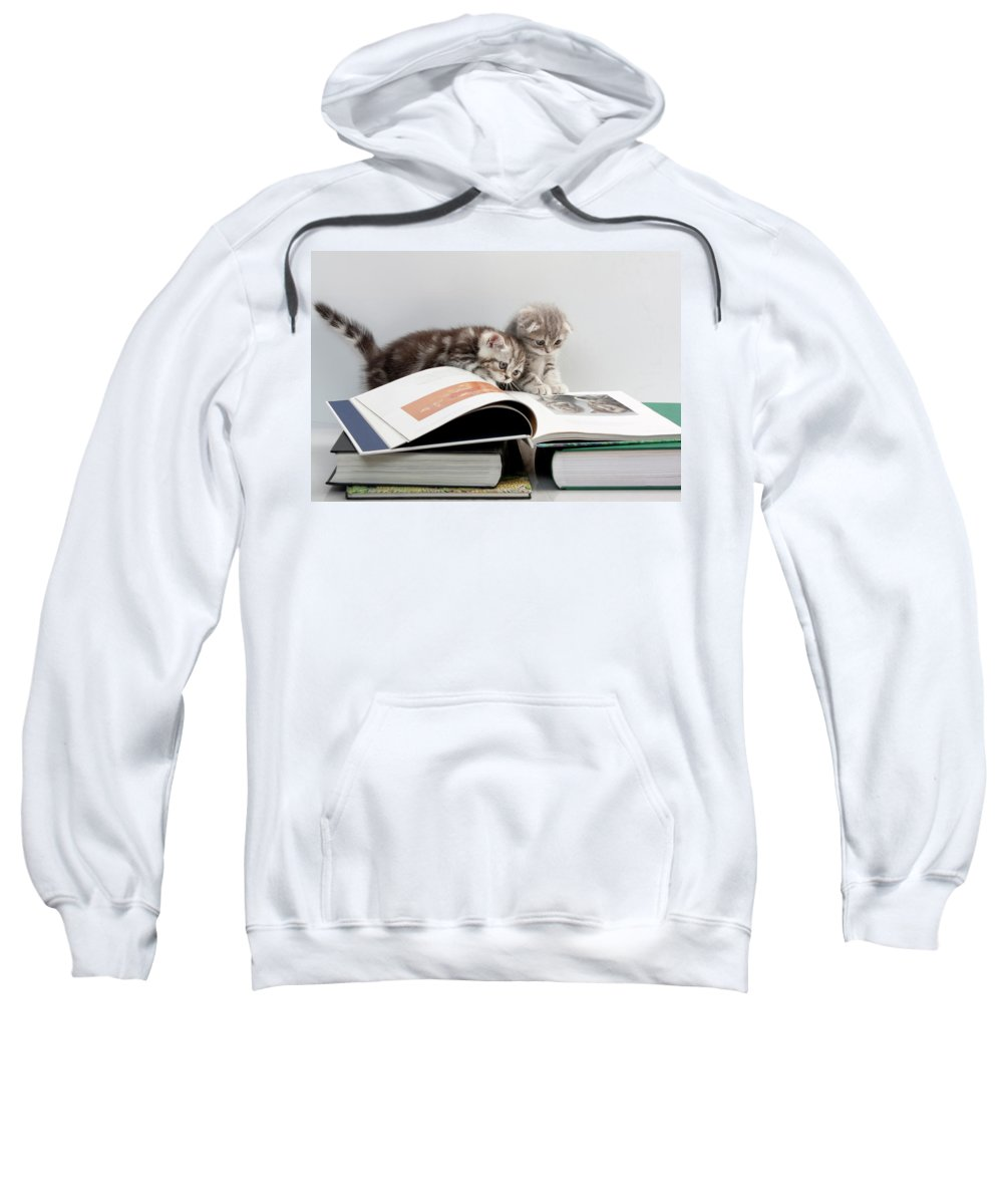 Scottish Fold Cats Sweatshirt featuring the photograph Scottish Fold Cats by Evgeniy Lankin