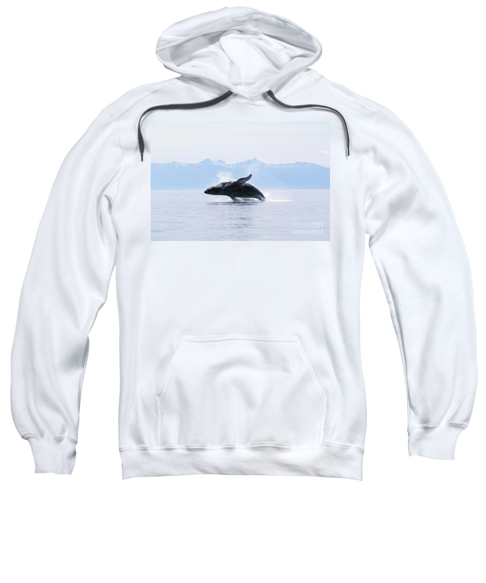 Active Sweatshirt featuring the photograph Humpback Whale Breaching by John Hyde - Printscapes