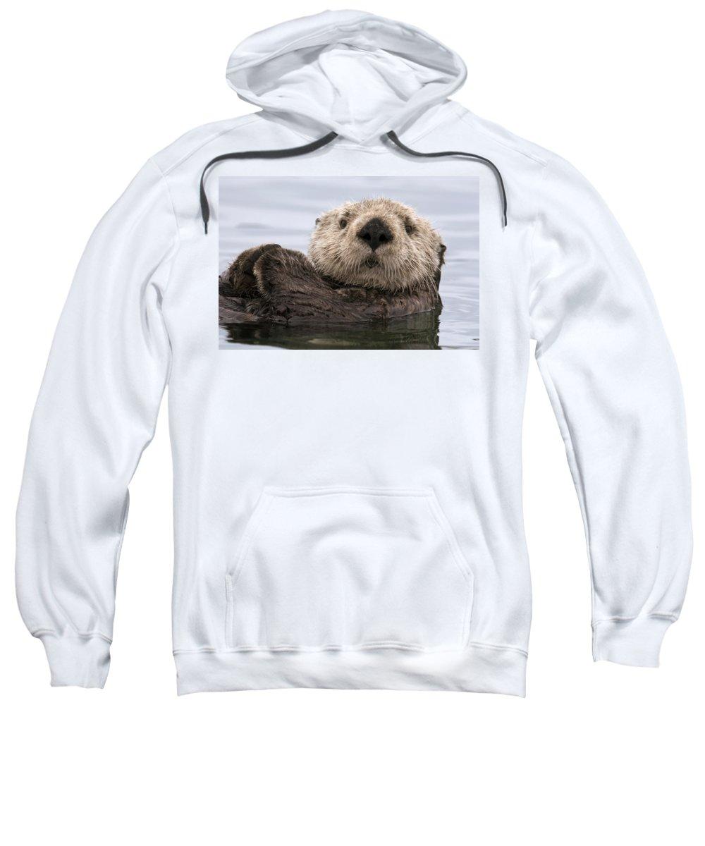 00429873 Sweatshirt featuring the photograph Sea Otter Elkhorn Slough Monterey Bay by Sebastian Kennerknecht