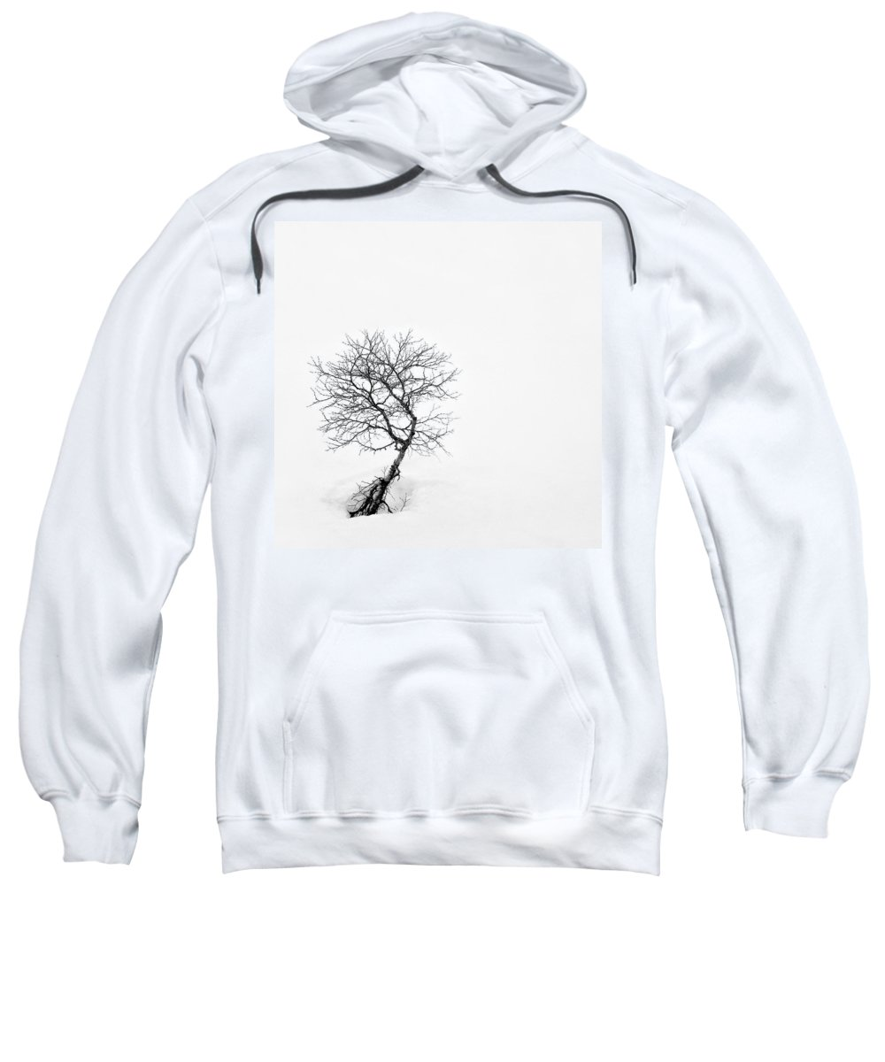 One Tree Sweatshirt featuring the photograph A Simple Tree by Dave Bowman