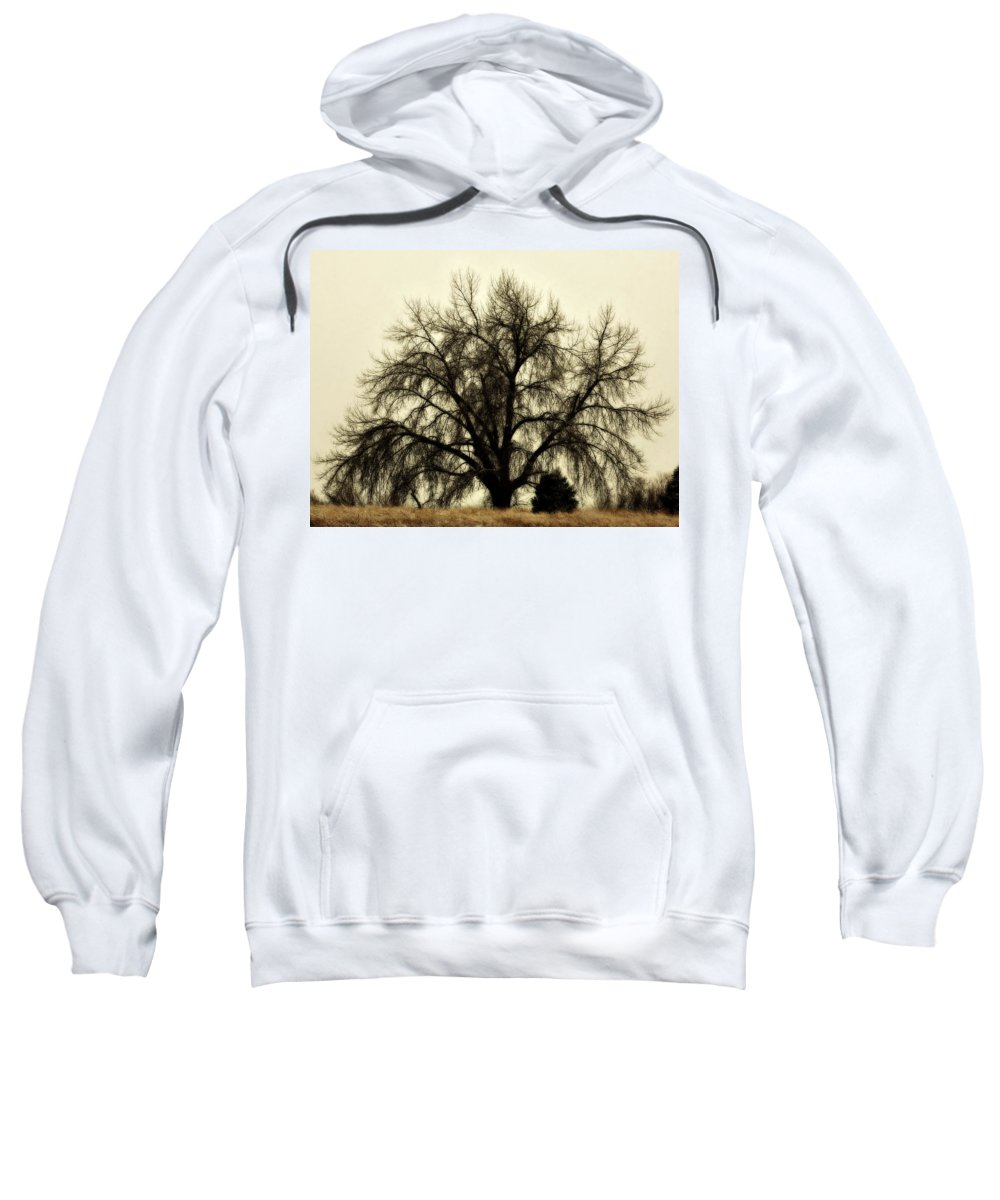 Tree Sweatshirt featuring the photograph A Winter's Day by Marilyn Hunt