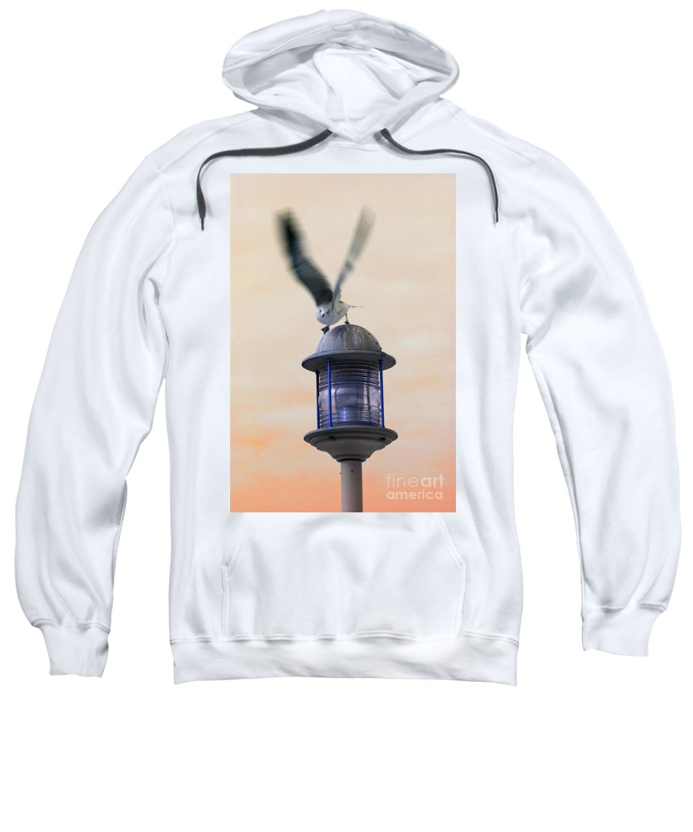 Seagull Sweatshirt featuring the photograph About To Take Flight by Karol Livote