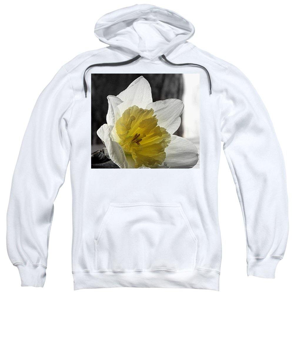 Daffodil Sweatshirt featuring the photograph Afterglow by Kathy Barney