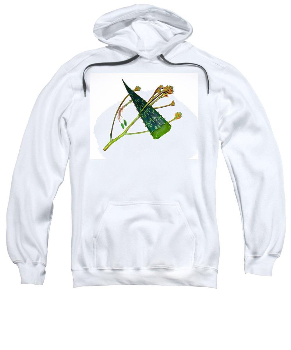 Aloe; Vera; Medicine; Properties; Medicinal; Ailments; Biblical; Ointment; Burns; Burn; Cuts; Rash; Sweatshirt featuring the photograph Aloe Vera by Allan Hughes