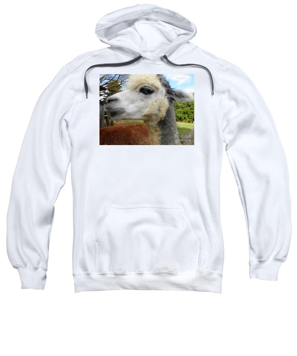 Alpaca Sweatshirt featuring the photograph Alpaca Blue by Karen Quinker