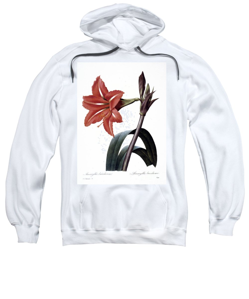 1833 Sweatshirt featuring the photograph Amaryllis by Granger