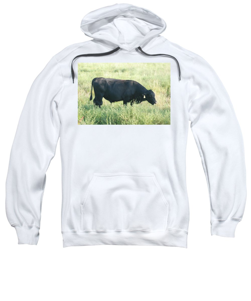 Cows Sweatshirt featuring the photograph American Cow by Rob Hans