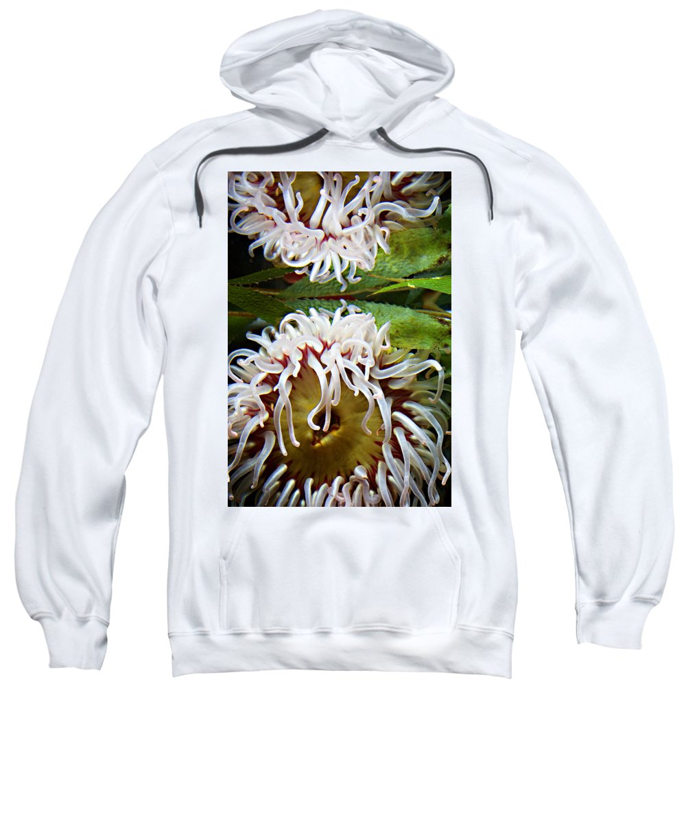 Aquarium Sweatshirt featuring the photograph Anenome Reflection by Marilyn Hunt