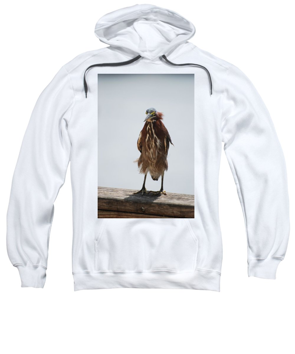 Birds Sweatshirt featuring the photograph Angry Bird by Rob Hans