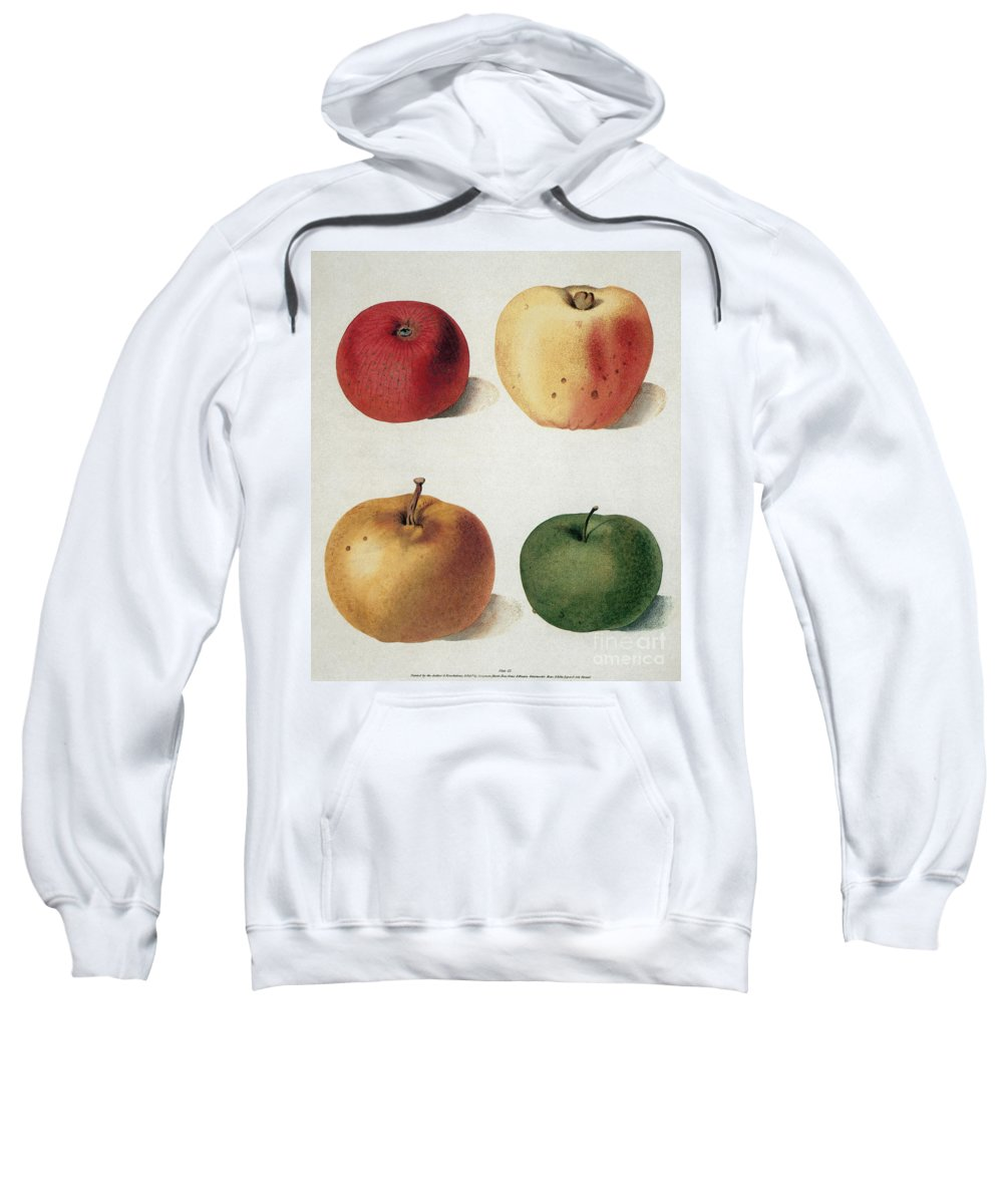 19th Century Sweatshirt featuring the photograph Apples by Granger