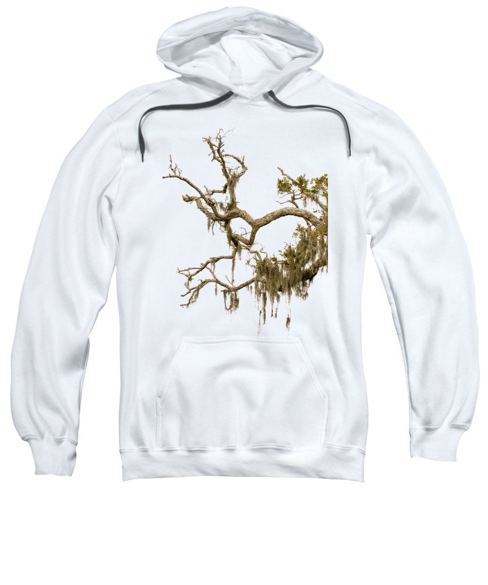 Southern Live Oak Hooded Sweatshirts T-Shirts