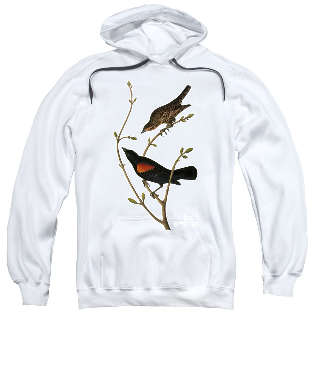 1838 Sweatshirt featuring the photograph Audubon: Blackbird by Granger