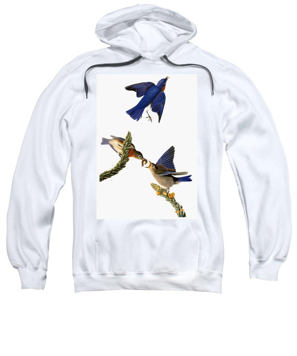 1838 Sweatshirt featuring the photograph Audubon: Bluebird by Granger