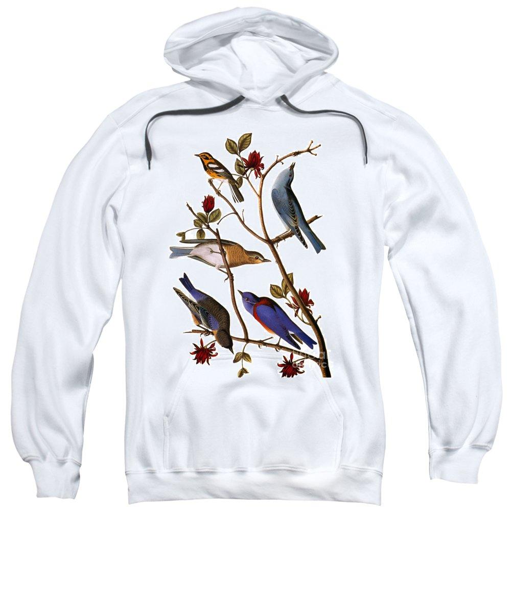 1838 Sweatshirt featuring the photograph Audubon: Bluebirds by Granger
