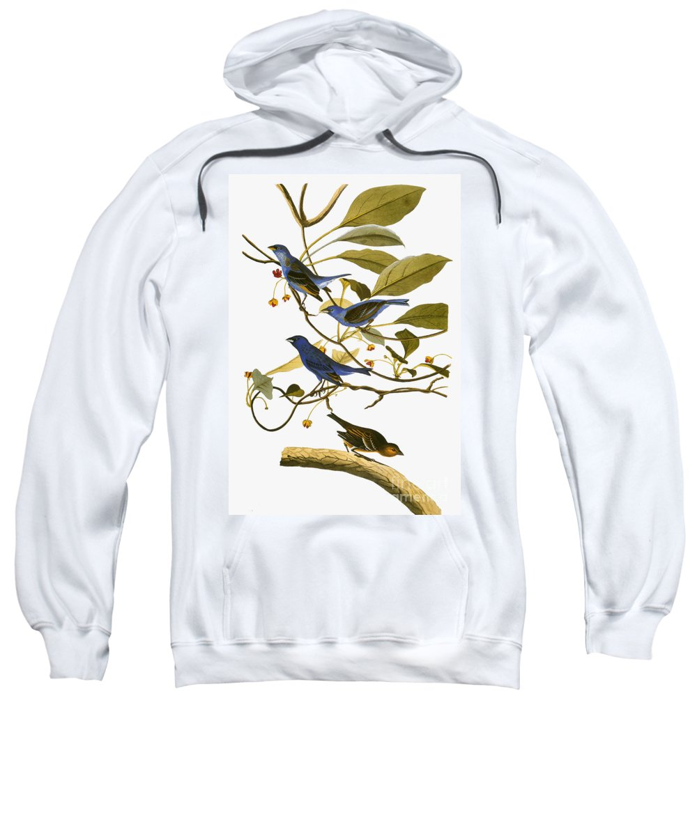 1827 Sweatshirt featuring the photograph Audubon: Bunting, 1827-38 by Granger