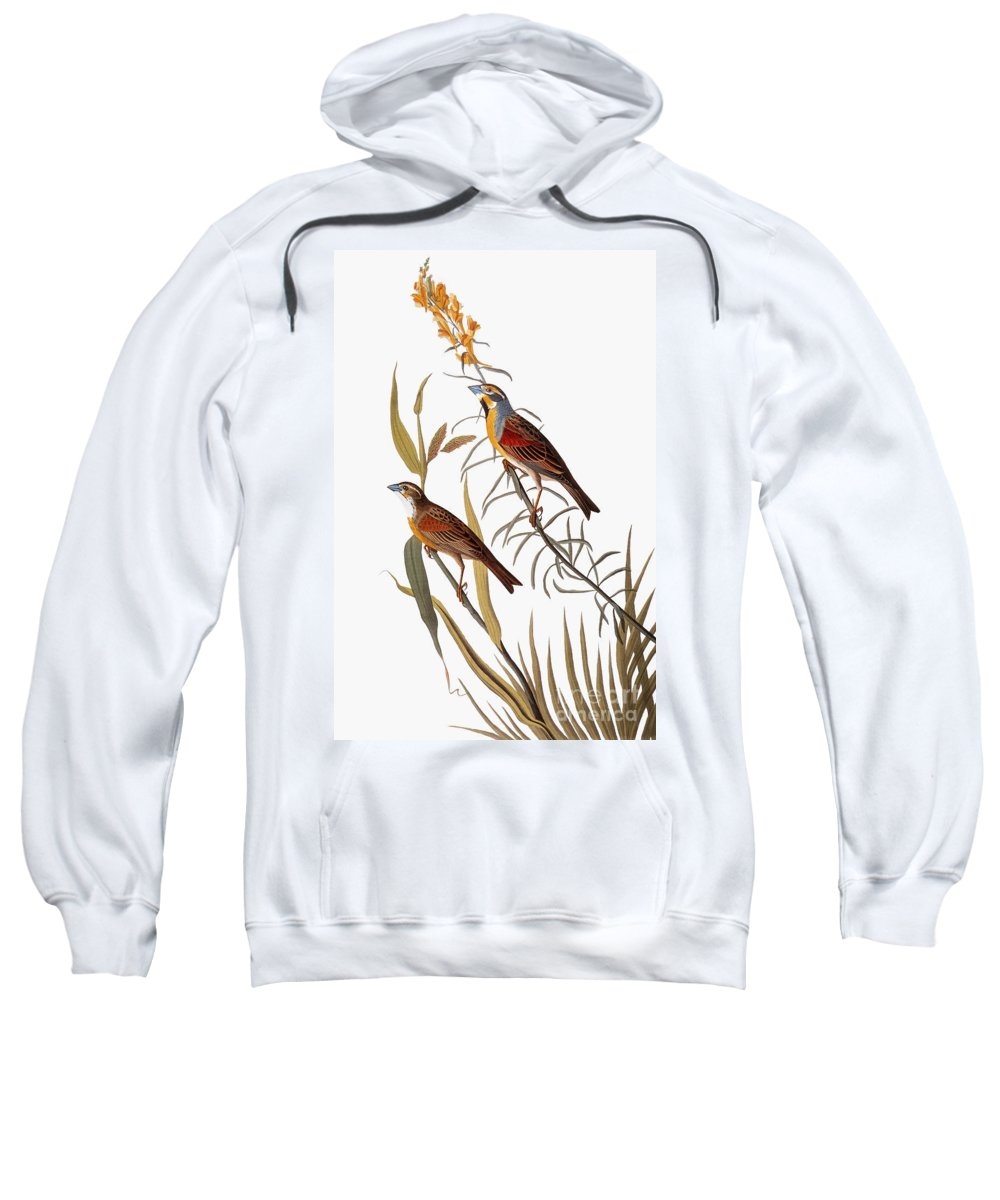 1838 Sweatshirt featuring the photograph Audubon: Dickcissel by Granger