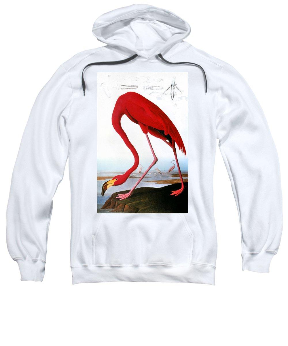 1827 Sweatshirt featuring the photograph Audubon: Flamingo, 1827 by Granger