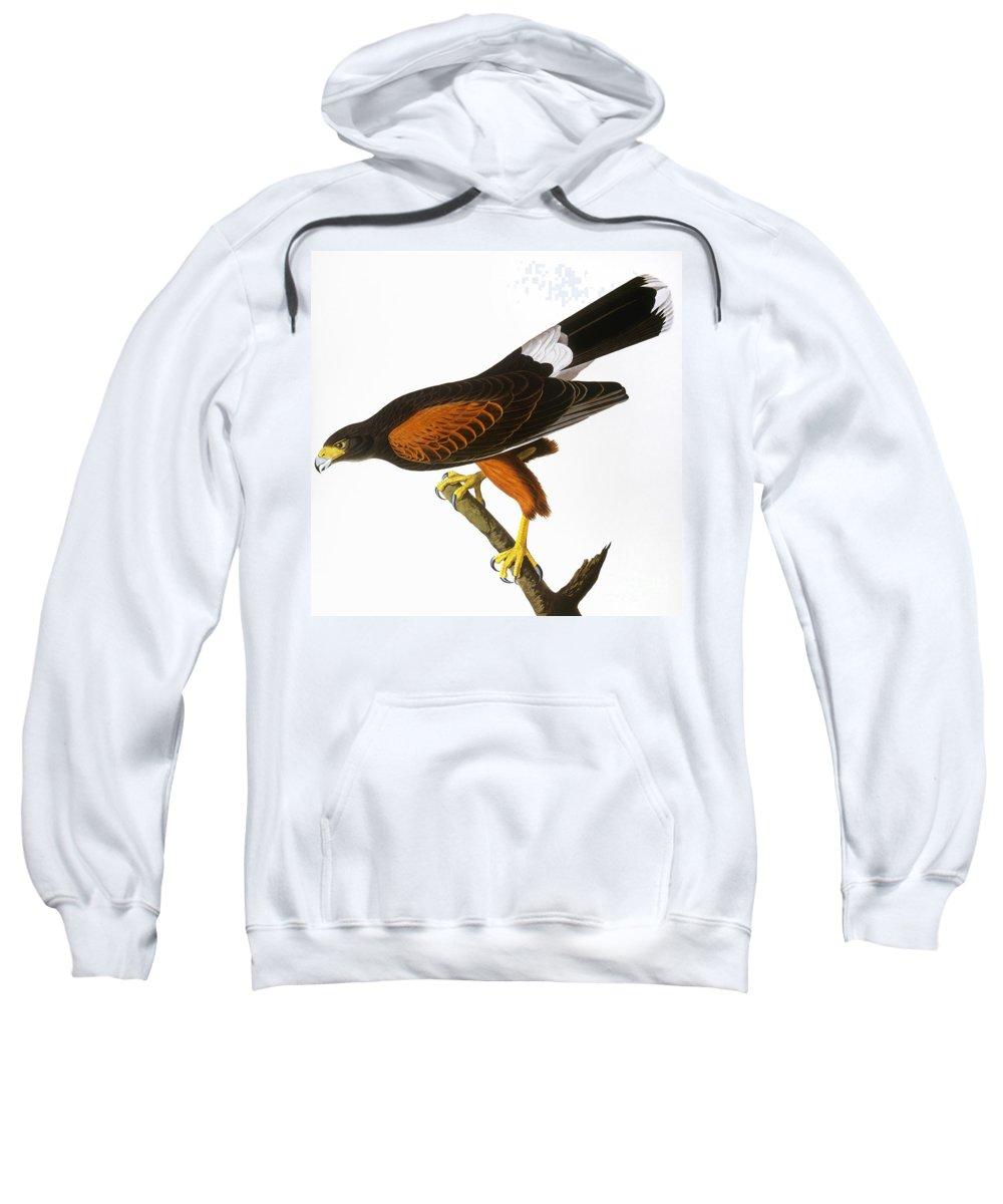 1827 Sweatshirt featuring the photograph Audubon: Hawk, 1827 by Granger