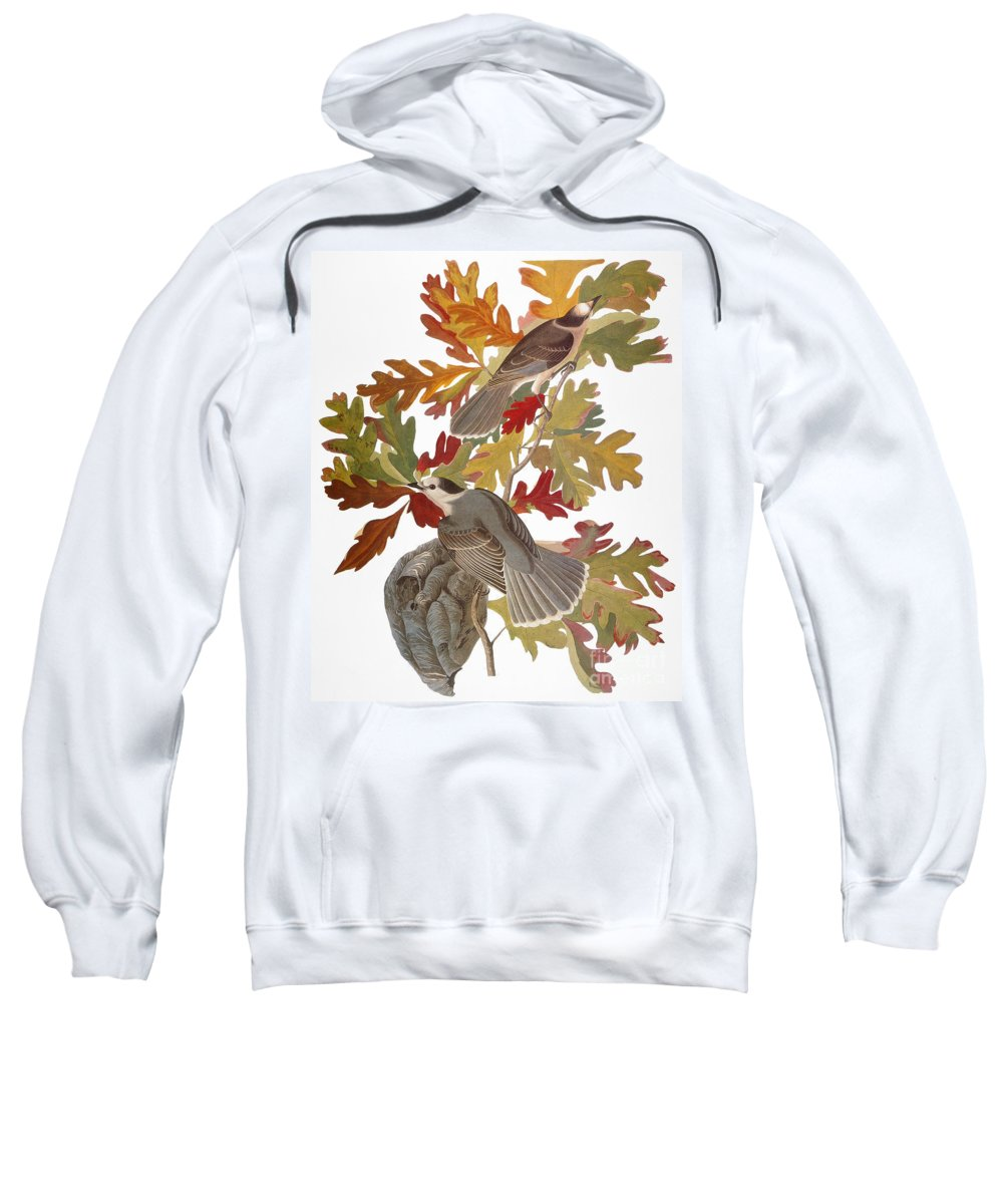 1838 Sweatshirt featuring the photograph Audubon: Jay by Granger